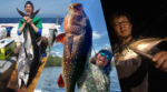 Xアンバサダー 鵜山和洋氏、加地武郎氏、西本康生氏の釣行レポート更新しました!
