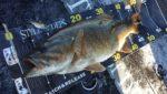 Xアンバサダー 渡部圭一郎氏の釣行レポート更新しました!